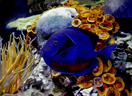 Original Oil Painting of Blue Tang fish against coral