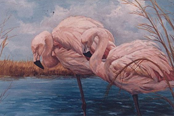 Original oil painting of pink American Flamingoes