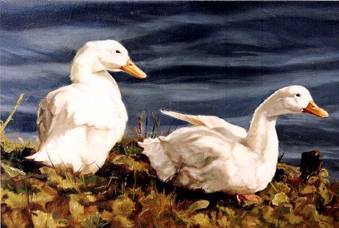 Original oil painting of domestic ducks